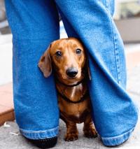 miedo-a-los-perros-cinofobia (4)