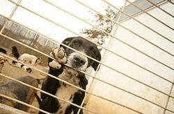 miedo-a-los-perros-cinofobia (5)