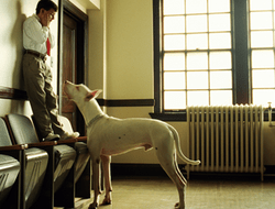 miedo-a-los-perros-cinofobia (6)