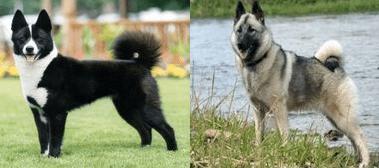 perros-de-caza2