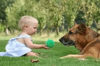 perros y niños-2