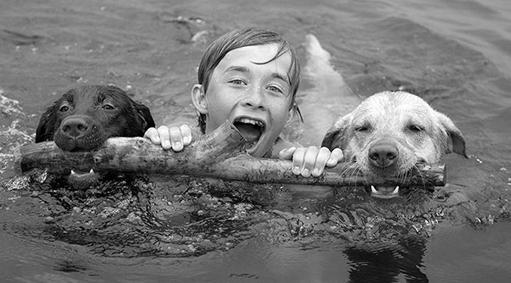 perros y niños