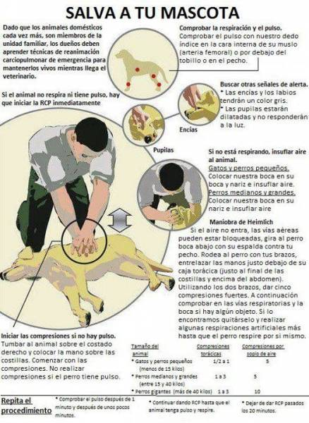primeros auxilios caninos.3