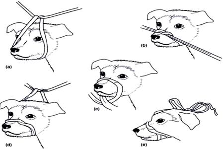 primeros auxilios caninos.5
