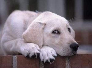 emociones-perro